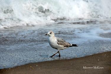A stroll along the surf