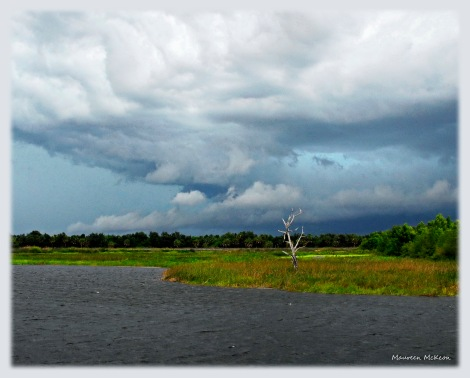 Stormy sky over Green Cay Wetlands