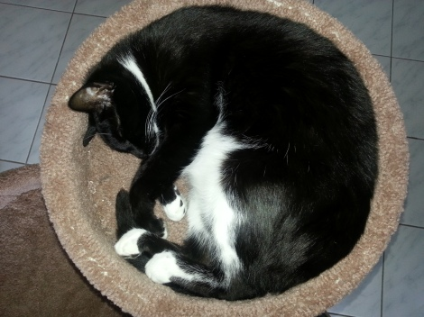 My cat Frankie taking a nap