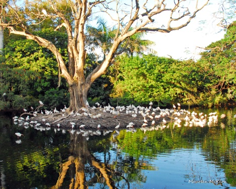 Birds of a feather gather at a tree